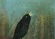 zwartevogel.jpg